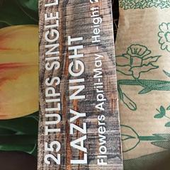Tulpenbollen, segundo informou Rijksmuseum usando iLost