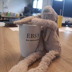 Popje, zoals gemeld door EBS Spijkenisse met iLost