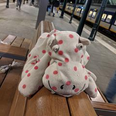 Grijze nijlpaard KNUFFEL met stippen, as reported to iLost