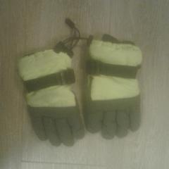 Handschoenen, as reported by Diergaarde Blijdorp using iLost