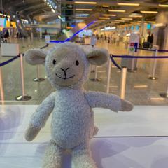 knuffel, zoals gemeld door Eindhoven Airport met iLost